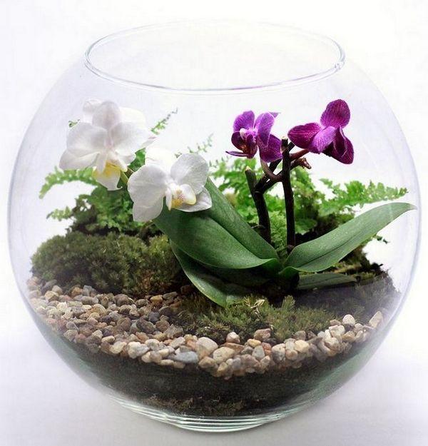 Флориуми с орхидеи