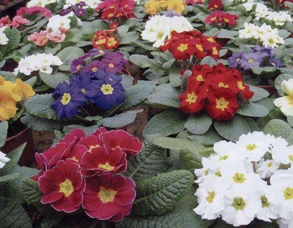Отглеждане на цветя