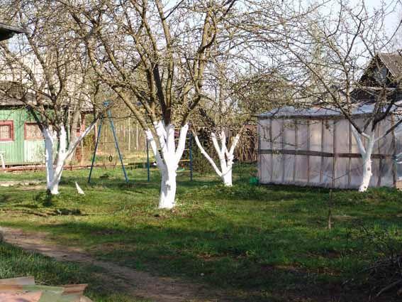 Защита на дърветата от гризачи
